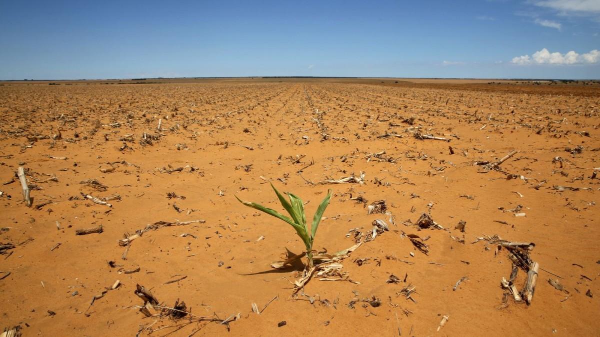 氣候變化帶來非洲各地旱災,農作歉收又造成大遷徙。 圖片來源:路透社