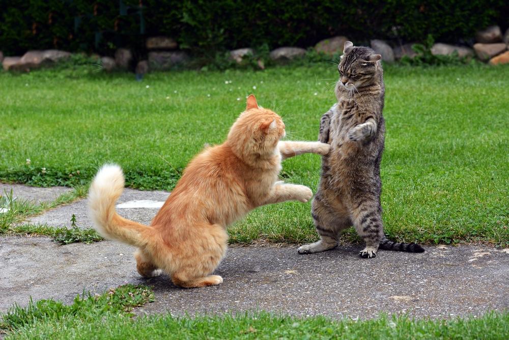 cat fight 2