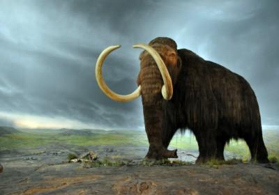 有基因學家表示,復活長毛象有助對抗氣候變化。 圖片來源:Creative Commons