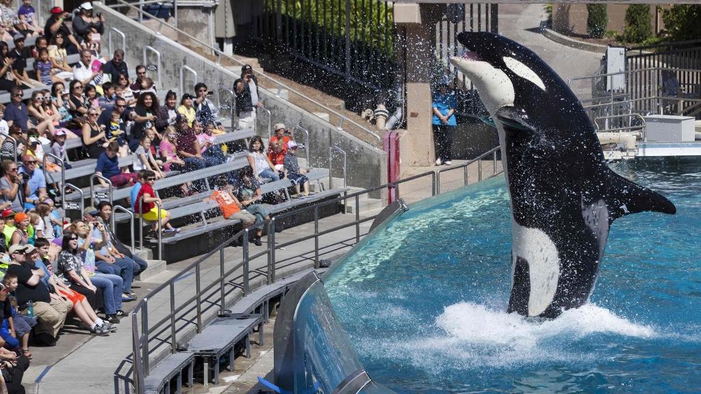 聖地牙哥海洋世界的殺人鯨表演。圖片來源:路透社