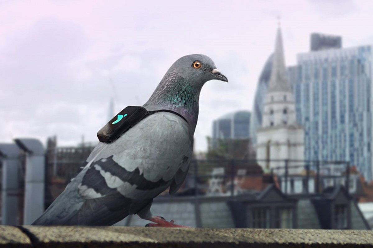 圖片來源:Pigeon Air Patrol
