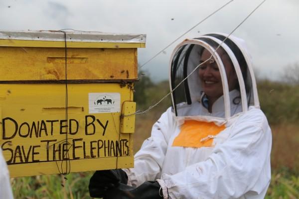 圖片來源:Elephants and Bees Project