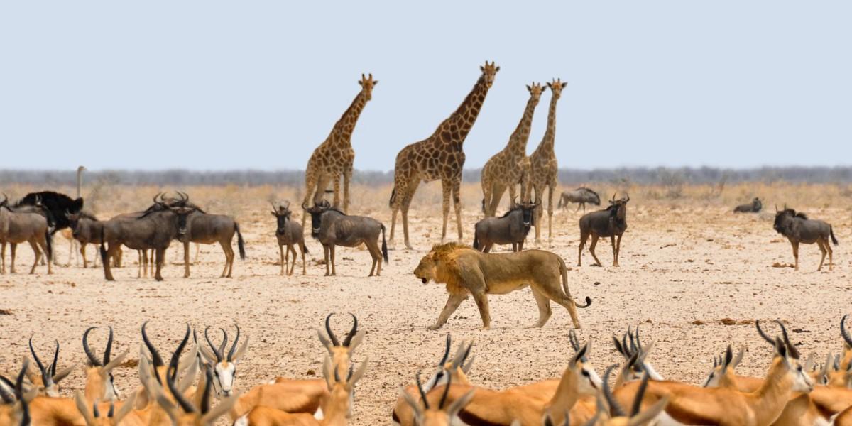 納米比亞大草原的野生動物群