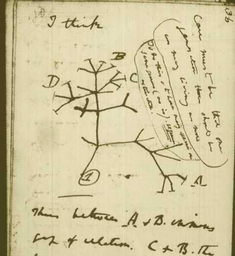 達爾文筆記裡的生命樹雛形