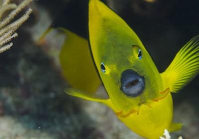 珊瑚礁是重要的海洋生物棲息地,如果受損,海洋生物的多樣性會急降。(圖片來源:iStock)