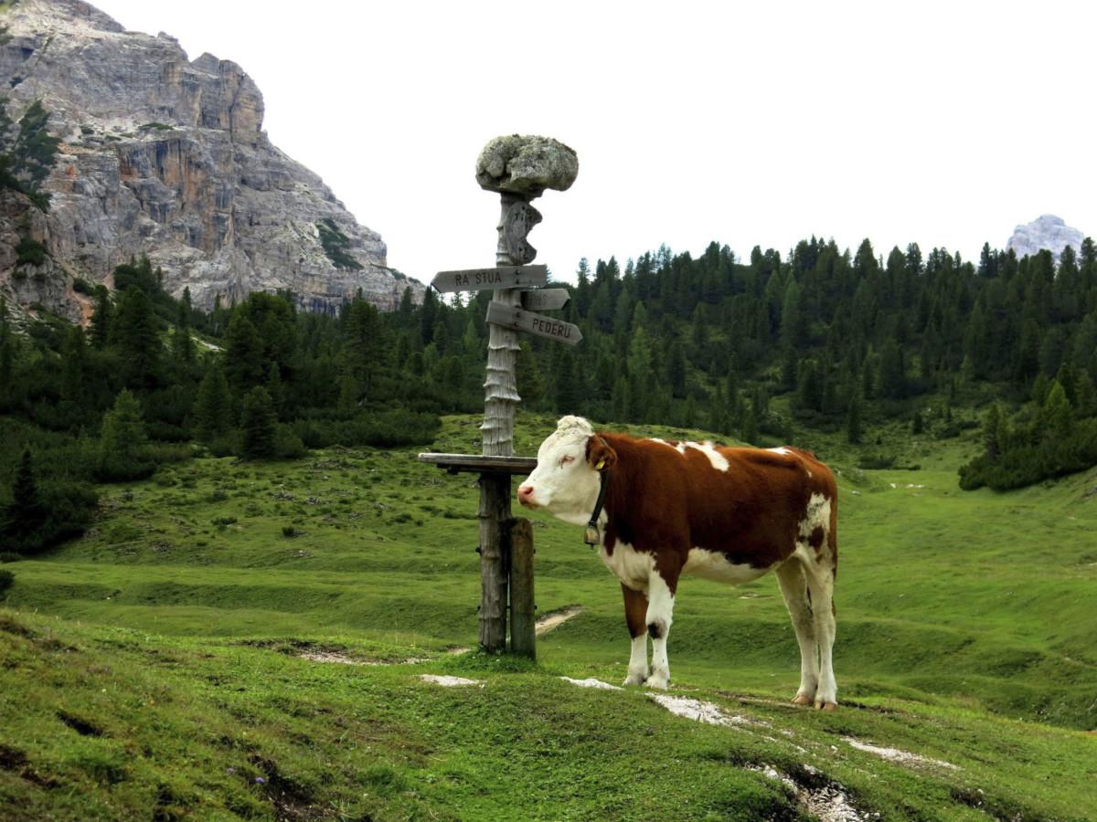 Cortina d'Ampezzo 有 16000 公頃用地為公共財產,多屬牧地、森林。