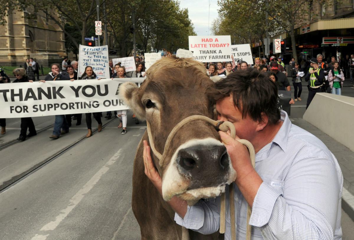 澳洲墨爾本一名牧民在示威中親吻牛隻。5 月 24 日,牧民抗議兩間大型牛奶加工企業壓價,令牧民難以維生。