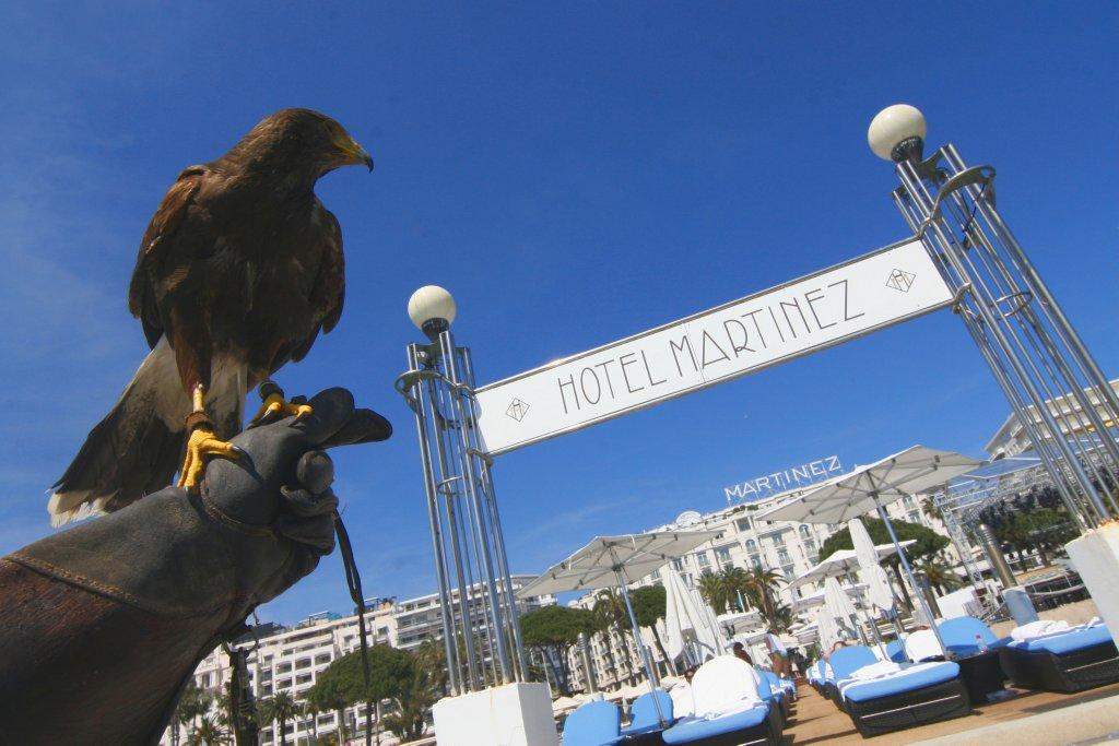 圖片來源:Hôtel Martinez