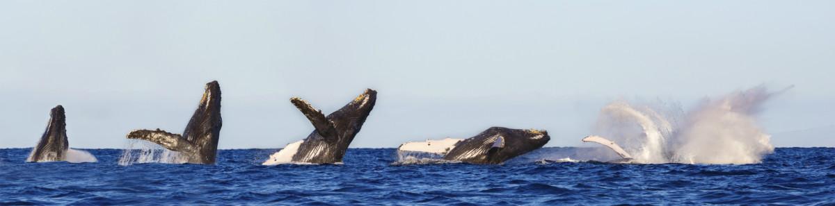 向鯨魚學習。