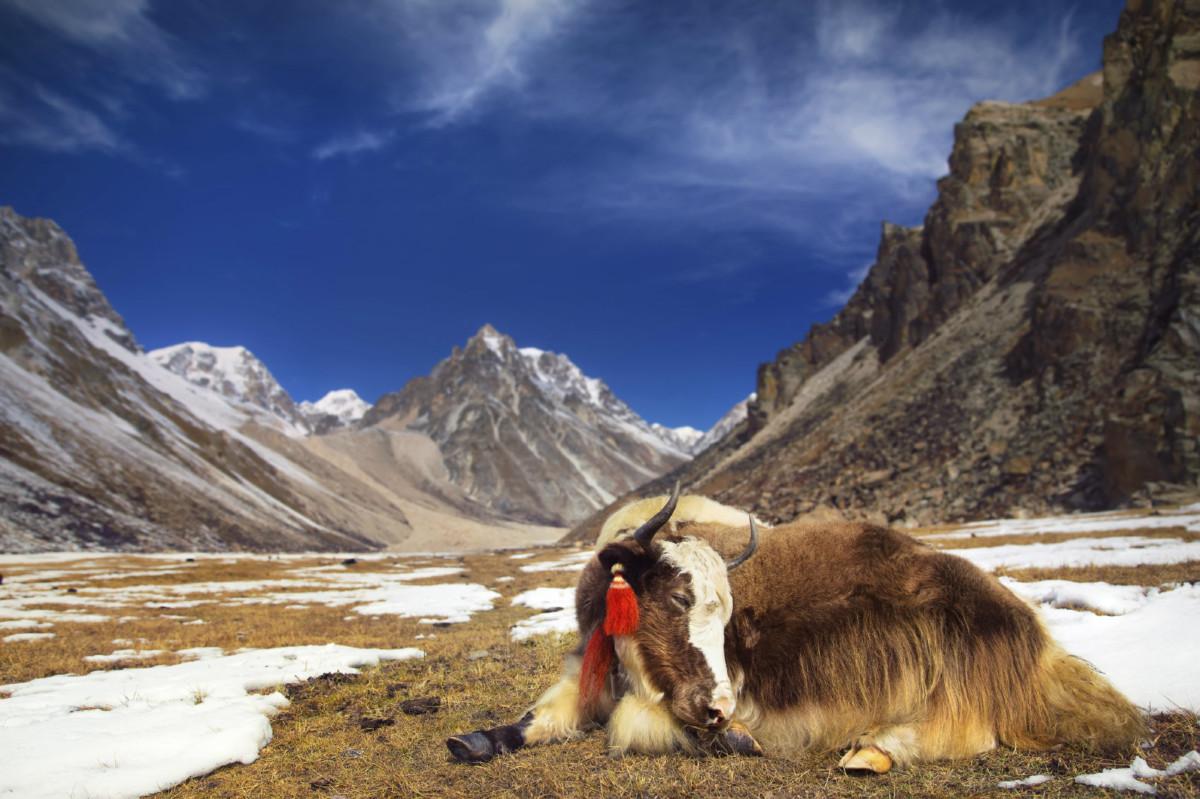 全球暖化令不丹 20 年來流失近五分一冰川,釀成洪水氾濫及河川乾涸。 圖片來源:iStock
