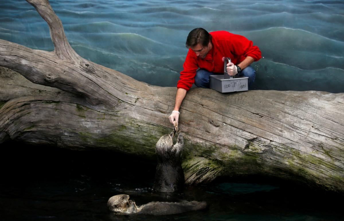 不論是生命體(動物)或無生命體(河流),運作與演變都遵從流動系統。 圖片來源:路透社