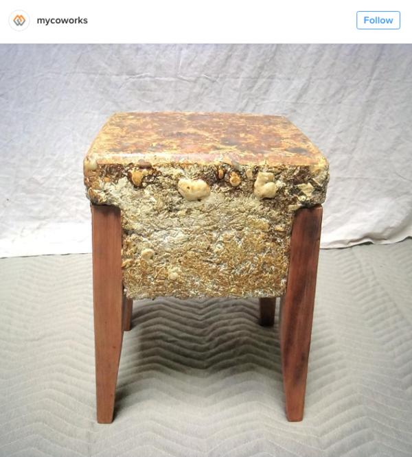 以菌絲體製作的家具 圖片來源: mycoworks@instagram