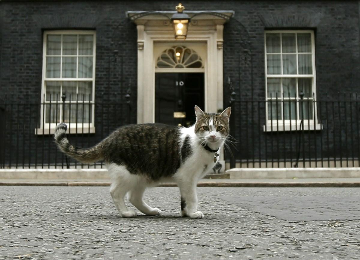 大不列顛及北愛爾蘭聯合王國內閣辦公室首席捕鼠大臣拉里貓身後的唐寧街 10 號原來不是現任英揆府第。 圖片來源:路透社