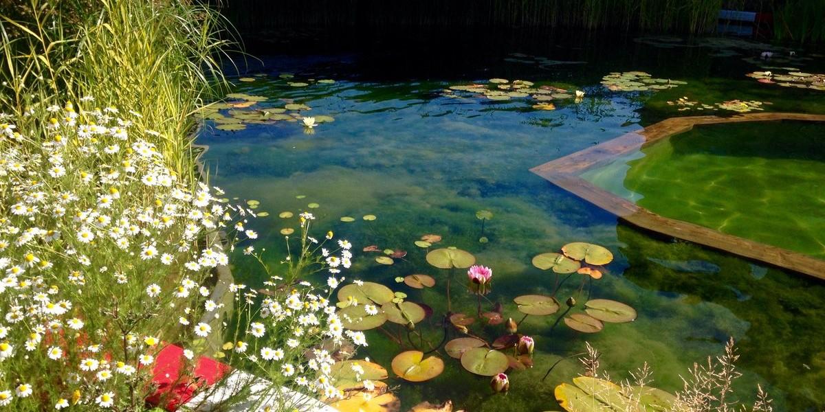 泳池一隅。圖片來源:Twitter