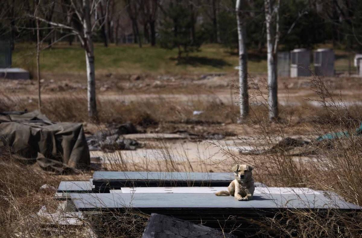 原址為奧運棒球場,拆卸後只有野狗遊離浪蕩。圖片來源:路透社