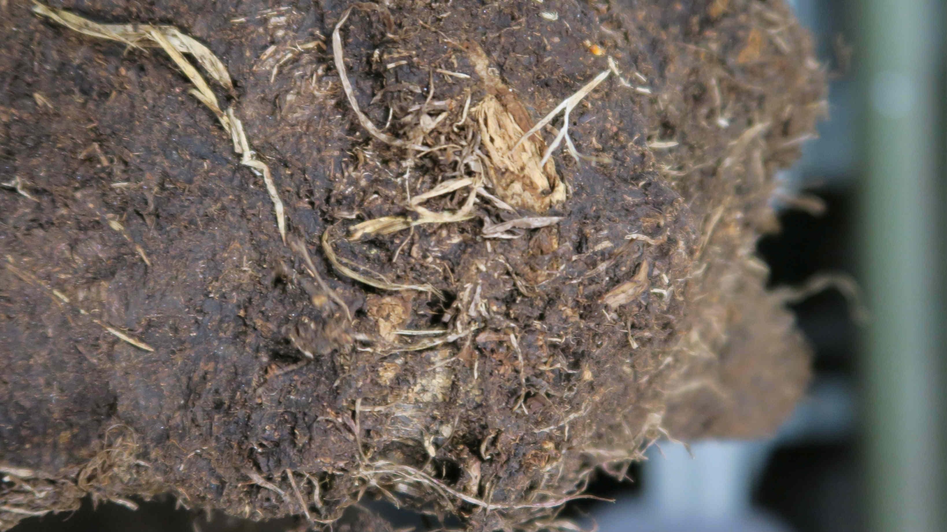 泥煤其實主要是植物組織經過高壓及高熱炭化而成,當經曬乾之後,就可當燃料使用。