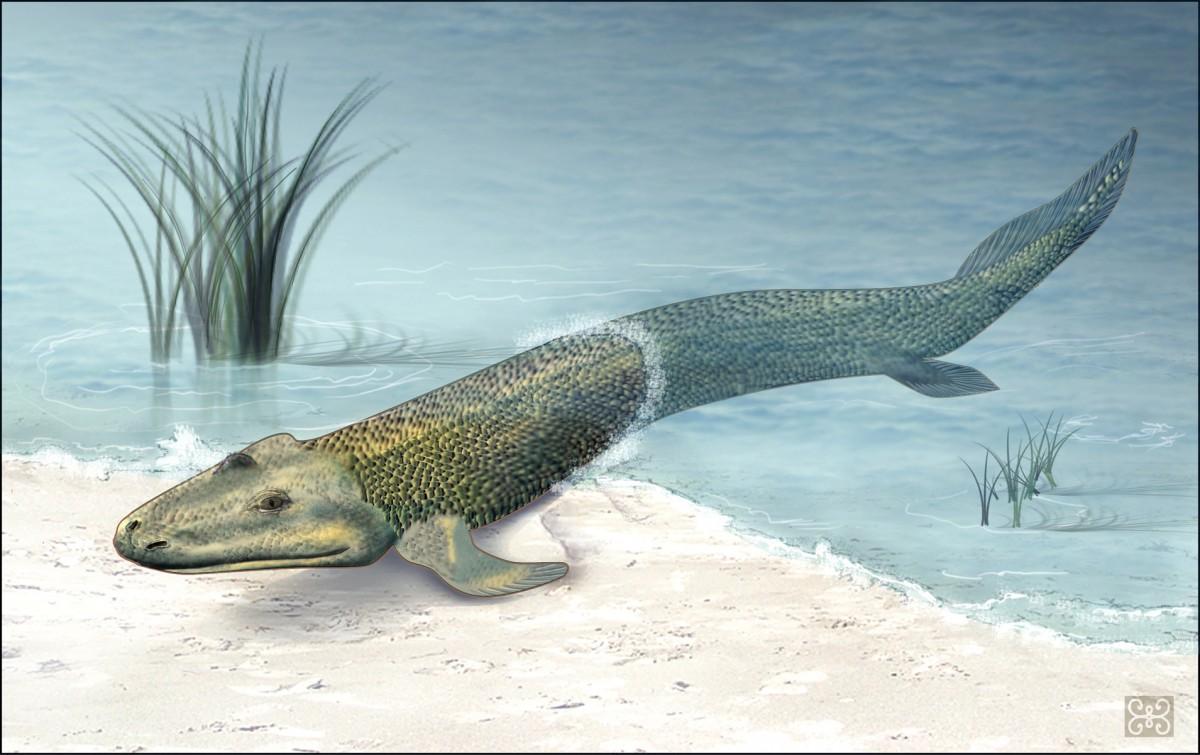 化石紀錄顯示,人類與海洋生活或具共同的祖先,魚類演化成兩棲類和在陸上生活的四足類。 圖片來源:redorbit