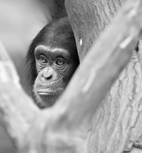 保育目的能平衡囚禁動物的責任嗎? 圖片來源:flickr