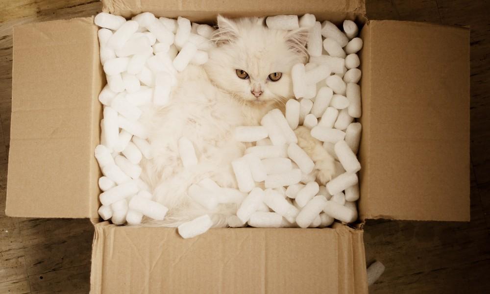 貓喜歡將自己塞進窄箱,但討厭被關起來。