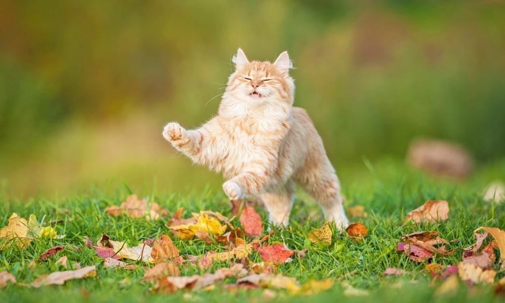 家貓如愛亂衝亂撞,或出於身心問題。