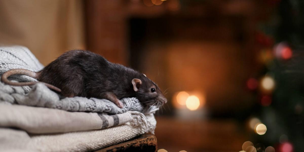 研究對比全球各地溝鼠的基因,考證出溝鼠的「移民史」。