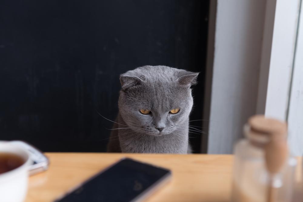 貓和人類一樣,會抑鬱和焦慮。