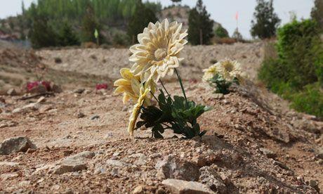 民勤縣上的塑料「野花」。 圖片來源:網易新聞