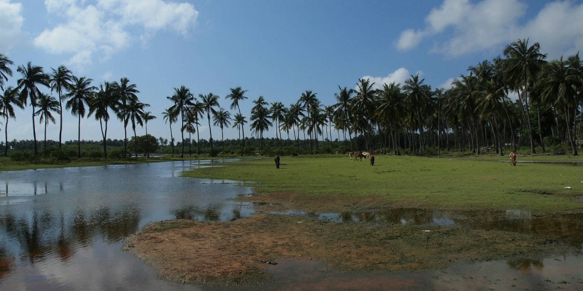 Kalpitiya 的椰樹,對岸是印度