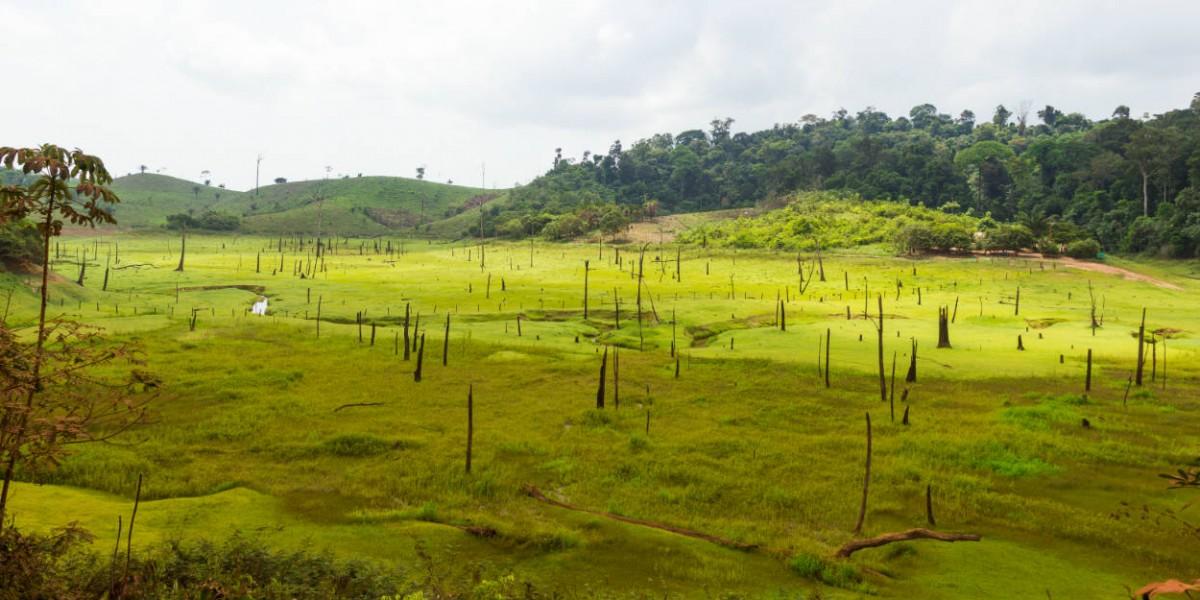 大量開墾耕地會破壞熱帶雨林。