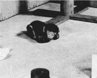 欠缺假母猴而伏在地上的幼猴。 圖片來源:American Psychologist