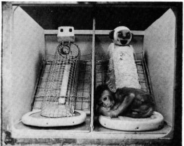 鐵絲網與絨布假母猴。 圖片來源:American Psychologist