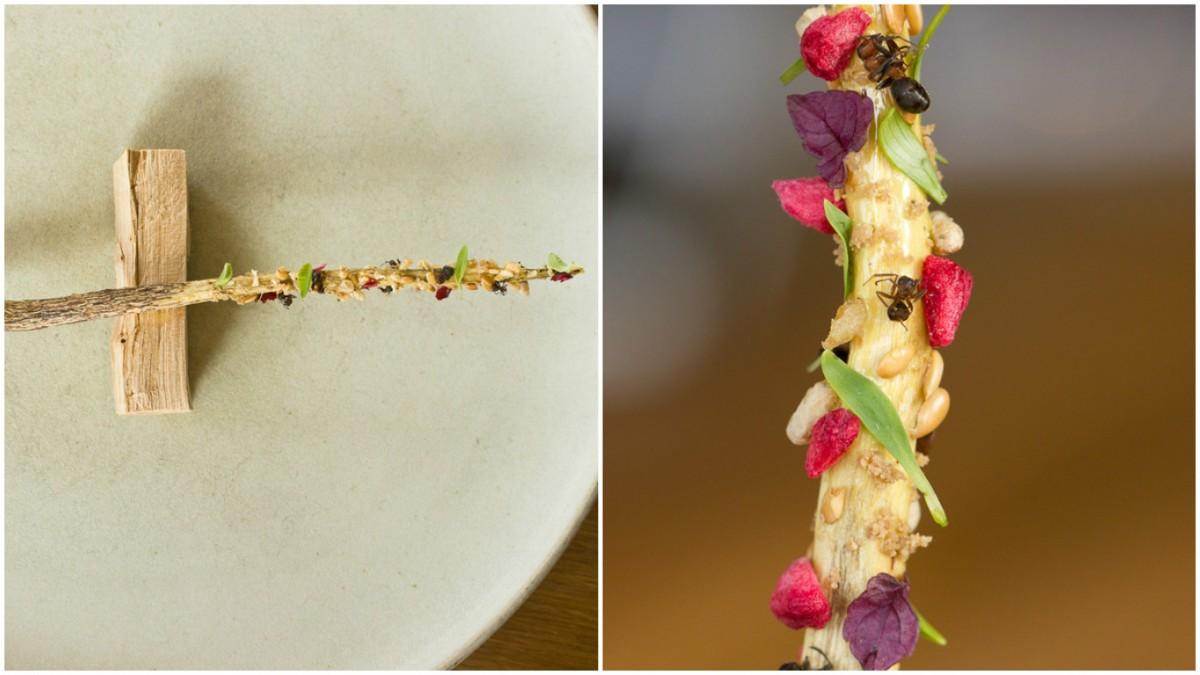 炸螞蟻對哥倫比亞人來說就如爆谷一般的存在,在澳洲,也有土著把蜜蟻當小食。Nordic Food Lab 利用兩種丹麥螞蟻,配搭烤杜松木、甘草、紅莓乾、櫻桃、紫蘇和香菜水芹等,做成精緻的「螞蟻百力支」。