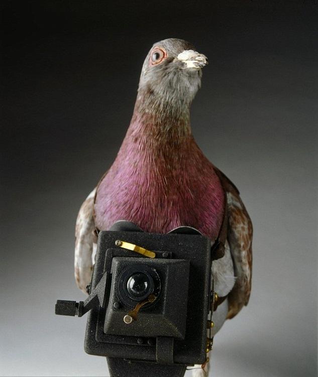 傳遞情報的方式顯然有極大進步,第一次世界大戰時曾在信鴿身上掛照相機以潛入敵方陣地。