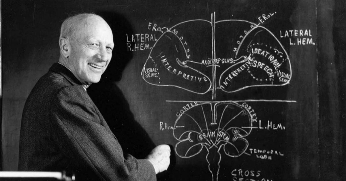 加拿大籍外科醫生 Wilder Penfield 就是為大腦外露的病人,進行大腦觸覺測試的始創者,並製作了著名的「大腦地圖」。  圖片來源:MO COSTANDI