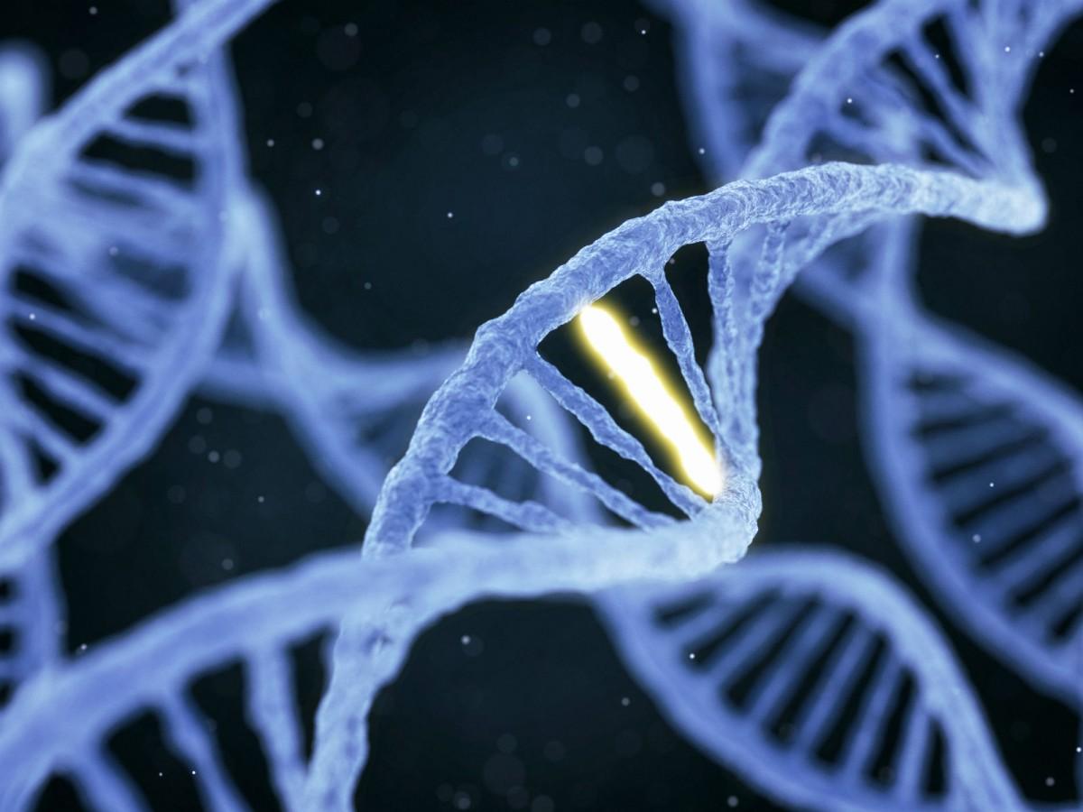 「基因驅動」工程需解決一大難題:自然抵抗性。