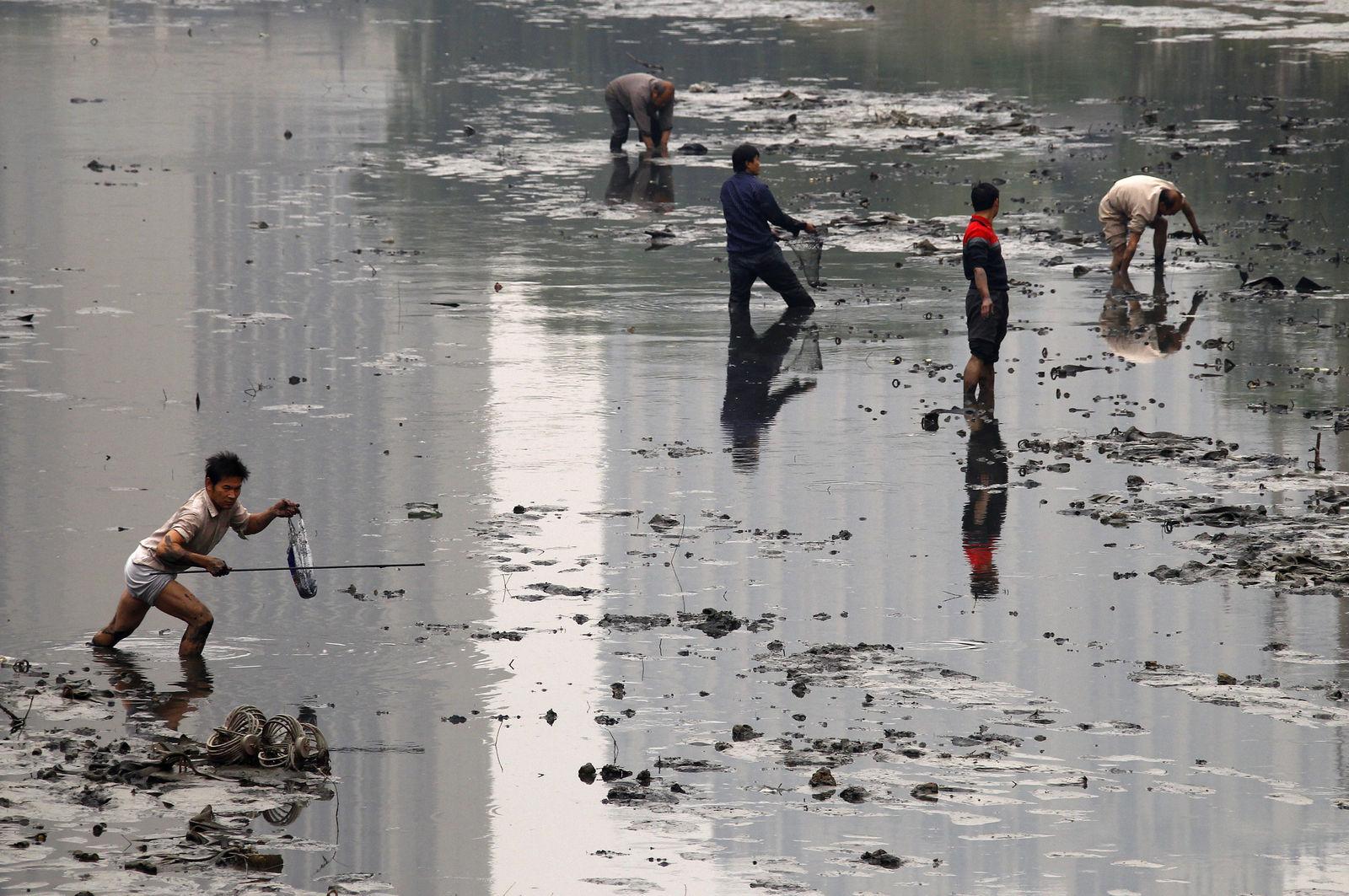 poluare-24-pesti-aproape-morti