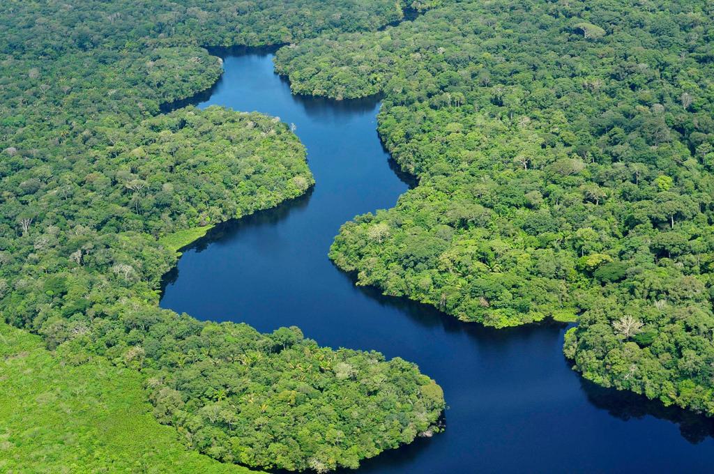 亞馬遜雨林,竟是由古人種成?