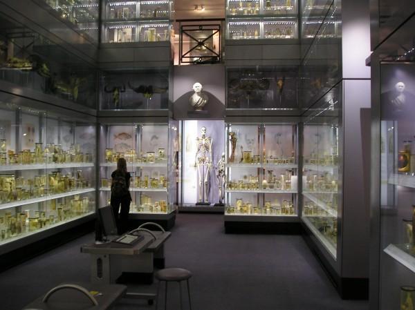 在皇家外科醫學院亨特博物館中,Charles Byrne 的骸骨直立於展品中央。 圖片來源:wikicommons