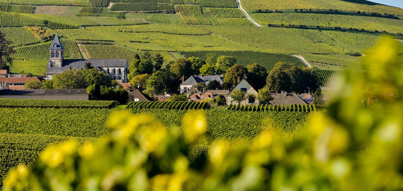 法國香檳區的葡萄園