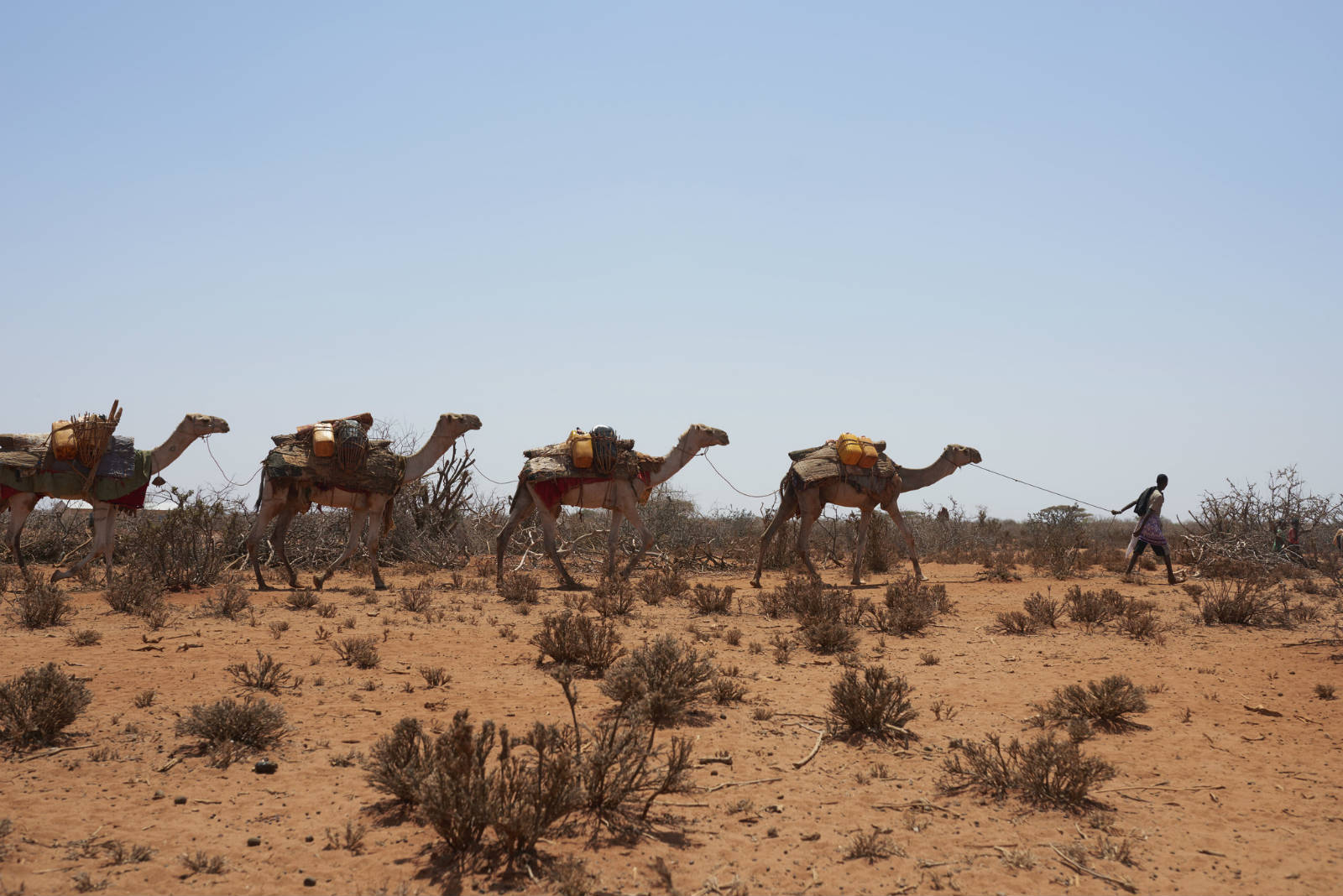 極端氣候帶來嚴重旱災,農作物失收。單在非洲之角的埃塞俄比亞、索馬里及肯亞,就有 1,100 萬人面對糧食不足的問題。(攝影:Tina Hillier/Oxfam)